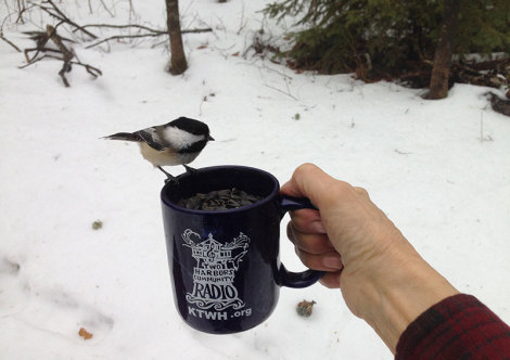 Chickadee mug shot
