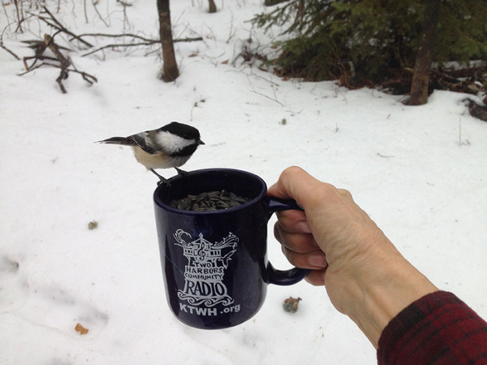 Even the Chickadees Admire Our THCR Mug!