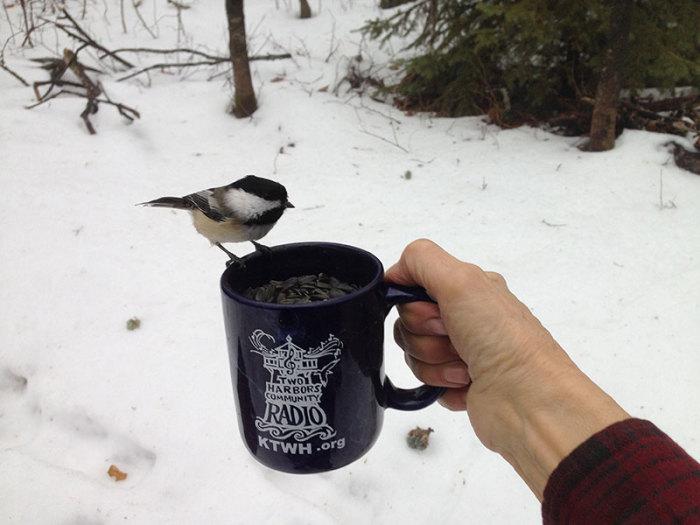 Even the Chickadees Admire Our THCR Mug!